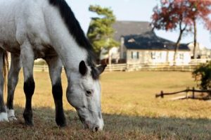 Southern Pines NC Horse Farms