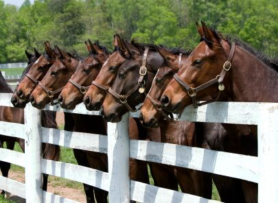 Southern Pines Horse Farms – Equestrian