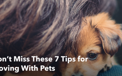 7 Tips for Moving With Pets