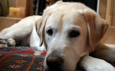 5 Great Items for Senior Dogs